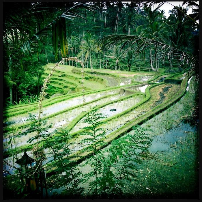 LovaLinda Bali PuraGunungRaung RiceTerraces