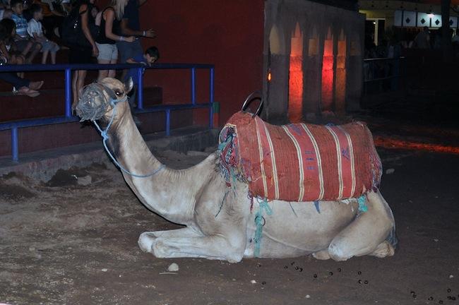 Les Mille et Une Nuits à Marrakech | LovaLinda - Fantasia 5