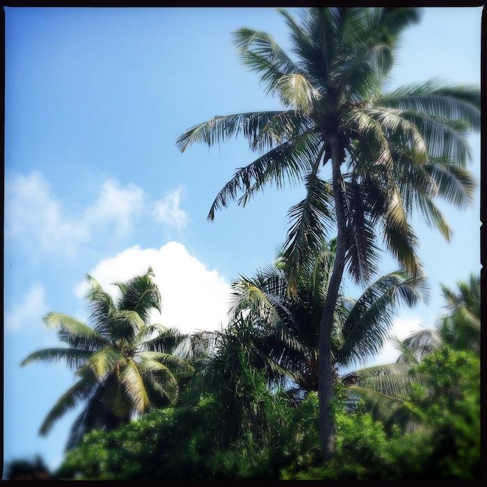 L'island Hideaway | Maldives | LovaLinda x Palm Trees