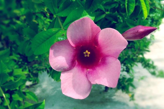 L'island Hideaway | Maldives | LovaLinda x Spa x Flowers