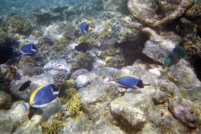 L'island Hideaway | Maldives | LovaLinda x Undersea Fish