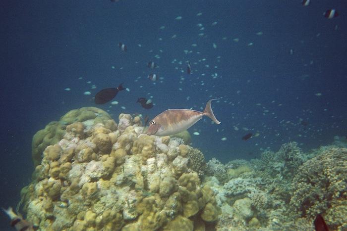L'island Hideaway | Maldives | LovaLinda x Undersea