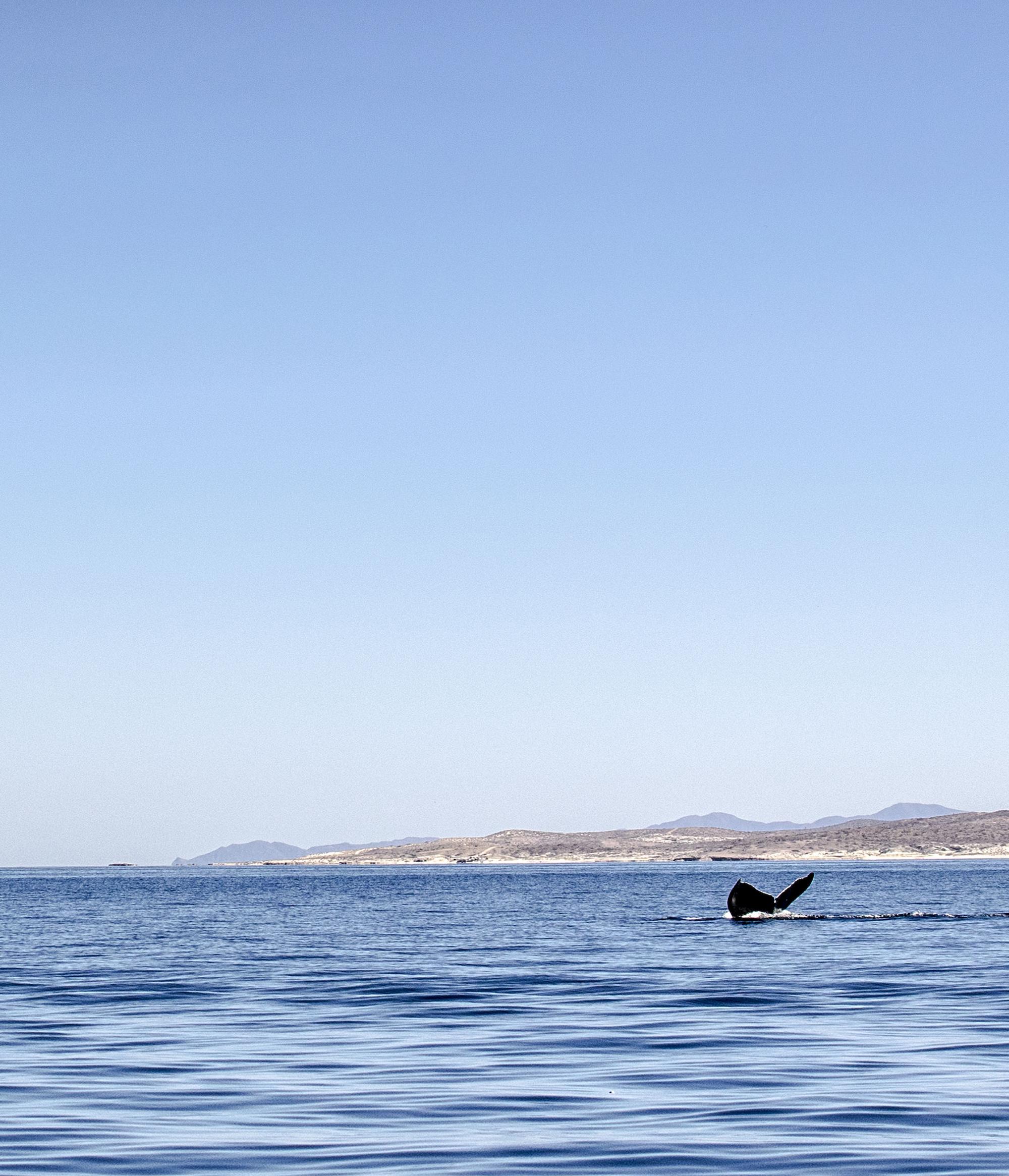 Whale Watching | Isla Espiritu | La Paz | LovaLinda Photography